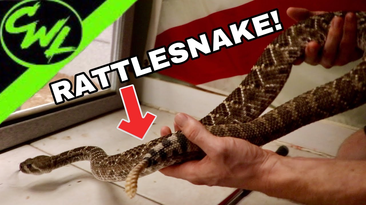 VENOMOUS SNAKE ROOM TOUR!!!