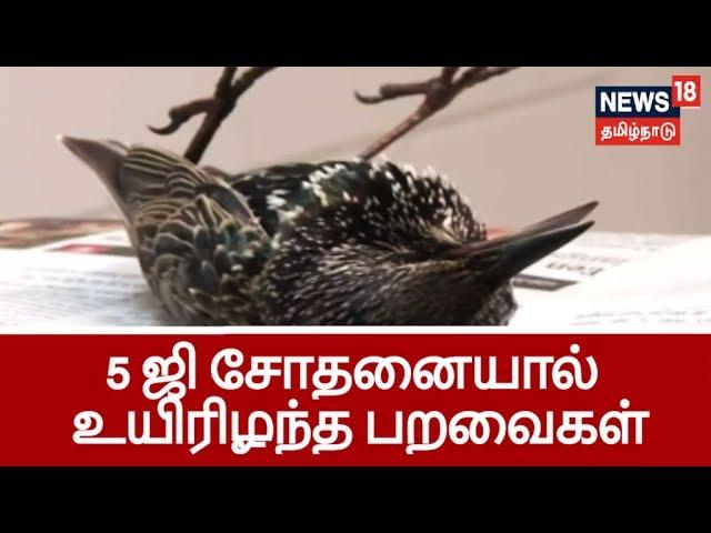5 ஜி சோதனையால் கொத்துக் கொத்தாக செத்து விழுந்த பறவைகள்