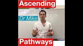 Gambar cover Sensory Pathways MADE EASY!!
