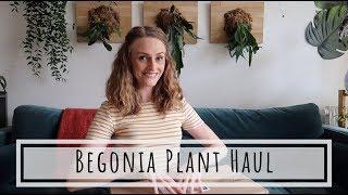 FREAKIN' BEGONIA HAUL BABY