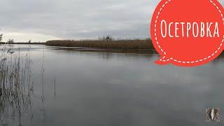 Как там с клёвом в Осетровке Рыбалка в Запорожье 2021