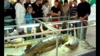 видео Экскурсия по краеведческому музею