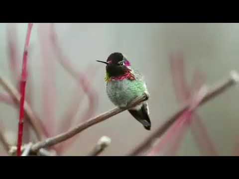 Вопрос: Какая птица меняет окраску в зависимости от времени года?