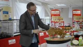 Монопородное шоу кошек породы Корниш-рекс, Алиса-Бест