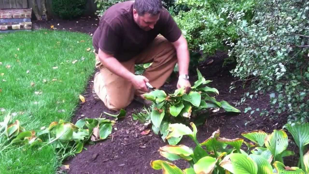 How and When To Prune Back Hostas, Peonies and Other Perrenials ...