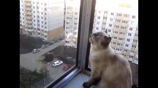 Кошка  гавкает :)