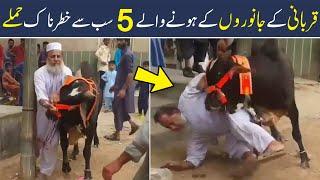 Funny Fights of Animals on Eid Ul Adha 2021