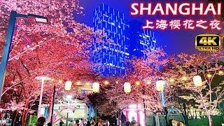 4K Shanghai Cherry Blossom Night Walk Tour 2021上海樱花季之魅力夜行记 浦东陆家嘴金融城&虹口足球场&鲁迅公园&徐汇西岸滨江夜景
