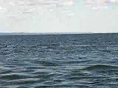 Las Ballenas del rio St. Lawrence