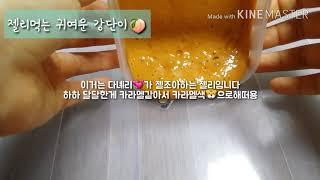 강다니엘❤ 성격 시리즈액괴 편집 🐶고생 📌하하