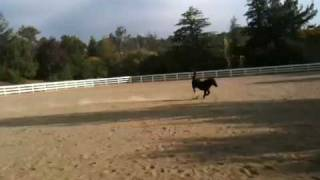 Miniature Horse Ayana is Full of Joy
