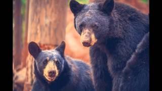 Фотографии диких животных | Photos of wild animals