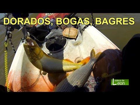 DORADOS, BOGAS, BAGRES pesca en Buenos Aires