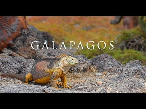 Galapagos Wildlife Adventure