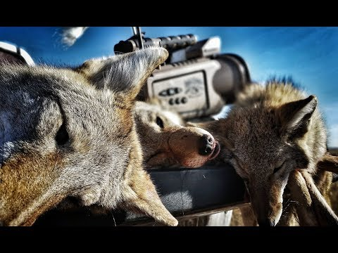 16 coyotes in 1 day including a coyote biting the call!! The Last Stand S2 - E6