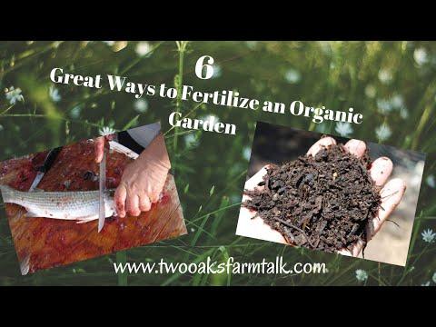 How to Fertilize an Organic Garden for Success 1