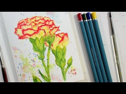 Carnation Flower Real Time Beginner Watercolor Pencil Tutorial (Only 4 colors!)