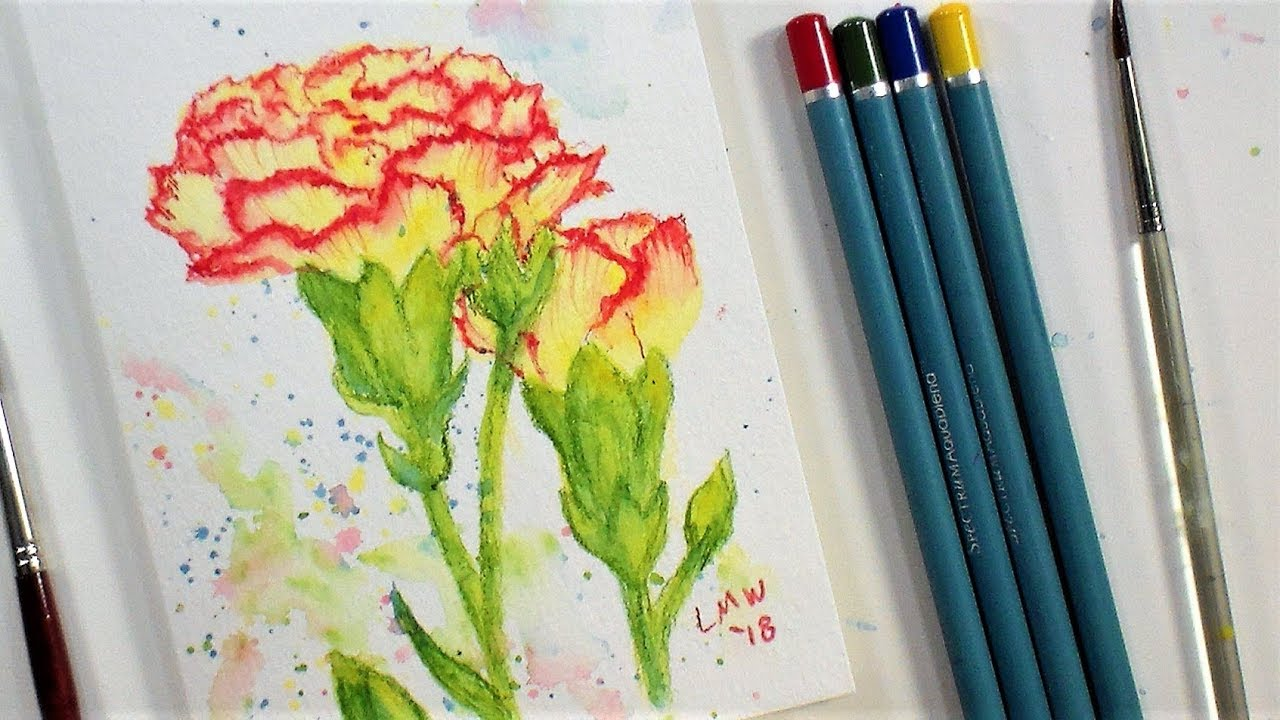 carnation flower real time beginner watercolor pencil tutorial only