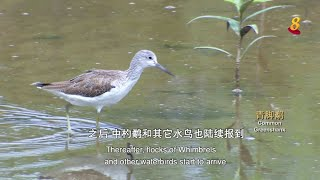 星期二特写   飞羽 第1集:水鸟篇(上集) - YouTube