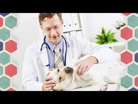Dr David Belém no Saúde e Você   pergunta dos telespectadores   Câncer de Mama
