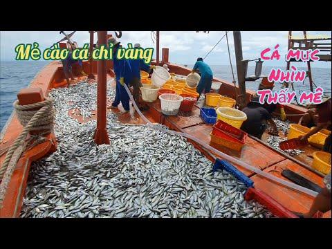 Mẻ cá chỉ vàng khủng,xem cách ngư dân ghe cào làm việc(fishing)