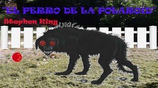 """""""EL PERRO DE LA POLAROID"""" Stephen King. Recomendación literaria"""