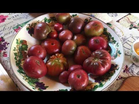 Заморозка томатов на зиму самый простой и лучший способ / мои секреты