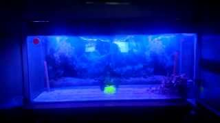 Smd Rgb 5050 Led 2m Fish Tank Test