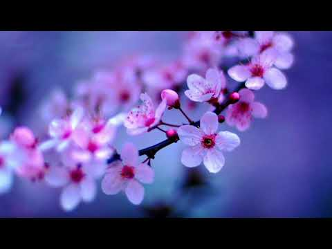 Richard Noll ~ Grace Video | Soothing and Uplifting Music Instrumental