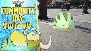 Mi Community Day de Swinub con shinies y evoluciones | Pokémon GO
