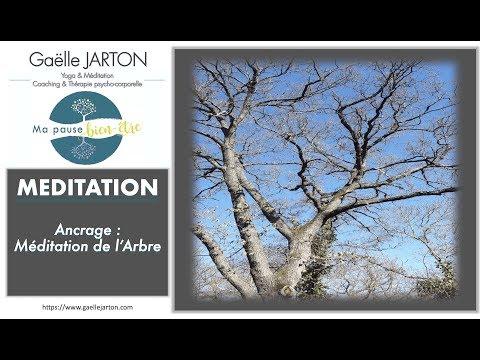 Recentrage & Ancrage : Méditation de l'Arbre - 15 min
