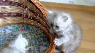 Happy cats!(веселые котята)!!!