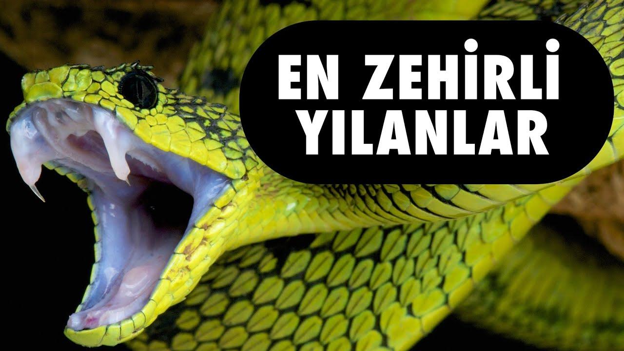 Dünyanın En Zehirli Hayvanı vikipedi