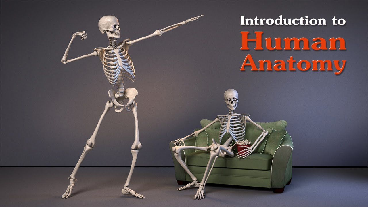 Introduction To Human Anatomy For Artists Youtube
