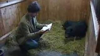 Dan Bäckman: Är djur bara djur eller är dom kulturella?