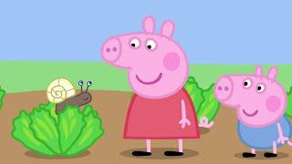 Peppa Pig English Episodes - Animals! - #065