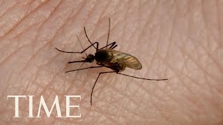 mosquito-borne-illness-eee-killed-11-people-2019-time