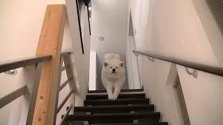 階段には滑り止め縦断敷いてありまーす(^^)✳ 遅すぎる行動パターン!! ...