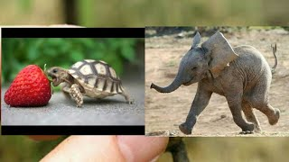 Cute baby animals Videos Compilation cute moment of the animals Cutest Animals On Earth