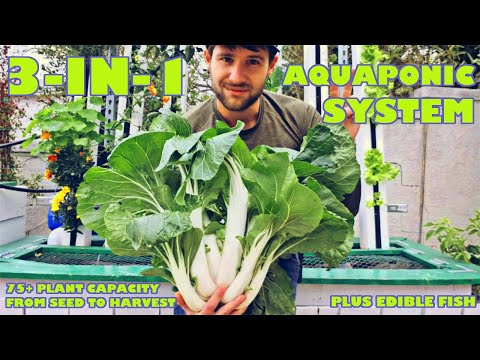 THREE Different Growing Methods In ONE Aquaponic System!  Tour Of My Backyard System