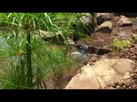 Ecosystem Pond Installation: East Maitland, NSW