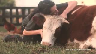 Kesimden kurtarılan bir inek ve sevgi dolu dokunuşlar
