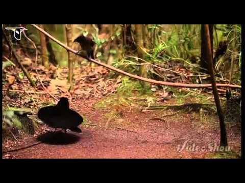 ឳ ធម្មជាតិអើយ (Oh Thomacheat Ery) song nature HD by Sin Sisamuth