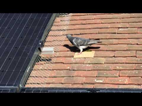Solar panel pigeon protection Kent