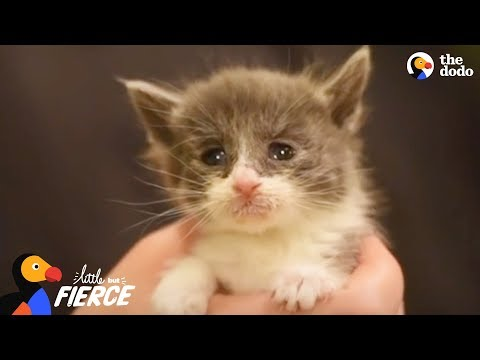 Kitten Who Was The Runt Of Her Litter Is A Tiny Fighter | The Dodo Little But Fierce