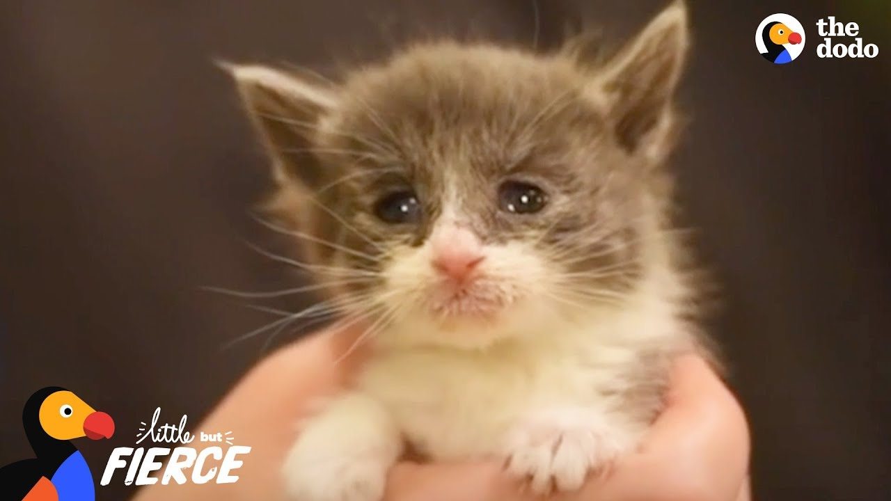 Kitten Who Was The Runt Of Her Litter Is A Tiny Fighter The Dodo