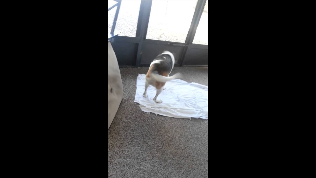 Best Way To Dry Dog After Bath