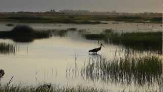 Lesvos Birds spring 2012 The Wetlands