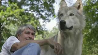 Leben mit dem Wolf ORF Themenmontag
