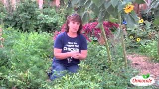 Garden Cousins: Tomatillos and Ground Cherries